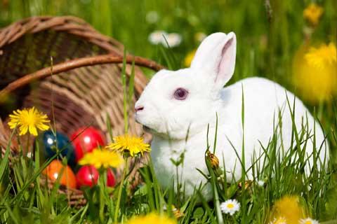 Velikonoční pozdravení